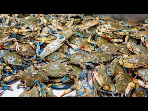 Blue crab CATCH and COOK surfside ya