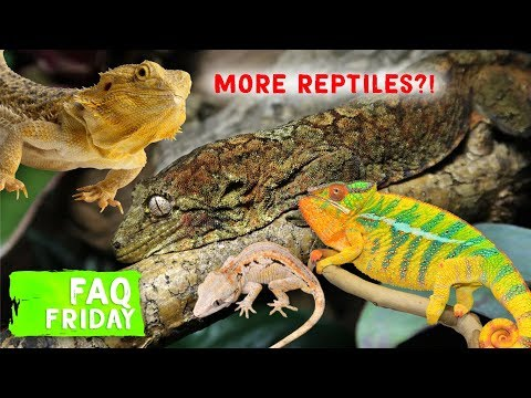 Getting More Reptiles!?   FAQ FRIDAYS