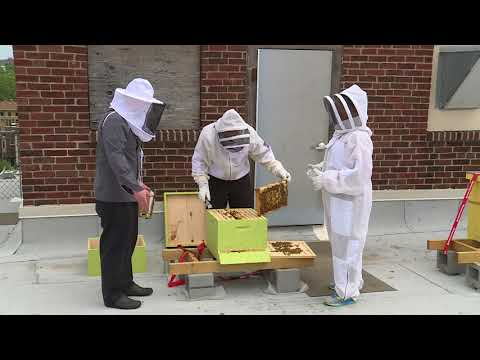 FOX 2 9AM CHASE PARK PLAZA BEES
