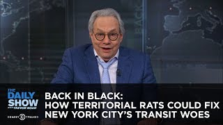 Back in Black: How Territorial Rats Could Fix New York City