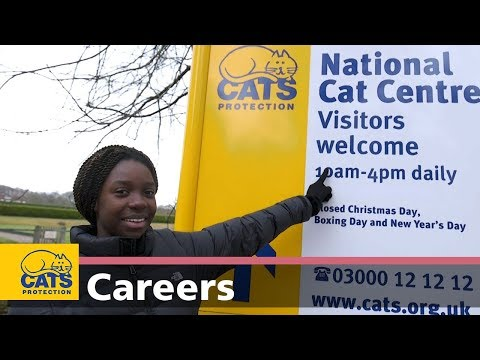 Introduction: working for Cats Protection – Careers with cats, episode one