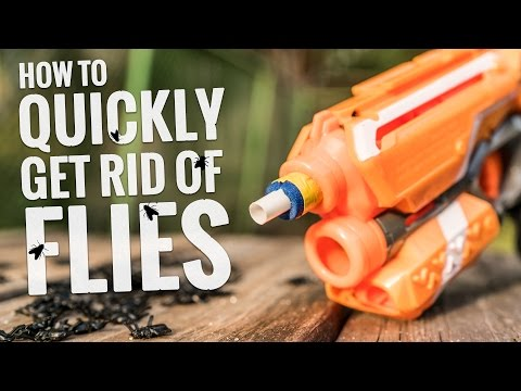 How To Quickly Get Rid Of Flies