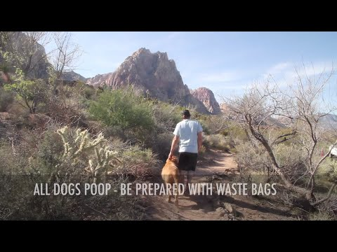 How To Dispose of Dog Waste Properly