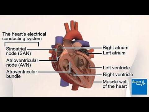 How your heart works - the electrical conduction system
