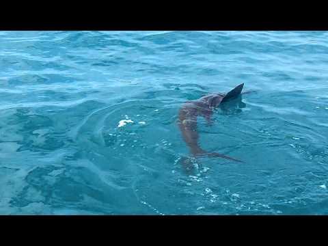 A Beautiful Sailfish catch with Captain BJ Meyer