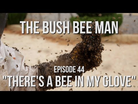 Re queening a Bee Hive - Episode 44: