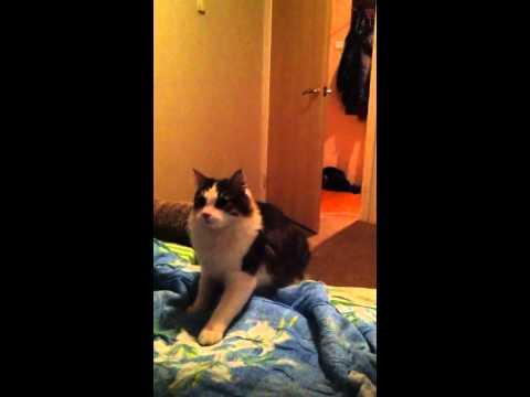 Backflip Cat