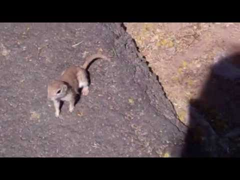 Arizona - One Bold Ground Squirrel