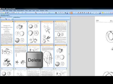 06 How to delete pages and images from a TIF or PDF in PixEdit document imaging program.