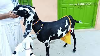 Date (14) (8) (2019/ 03356051560 top calass rajanpuri abluk