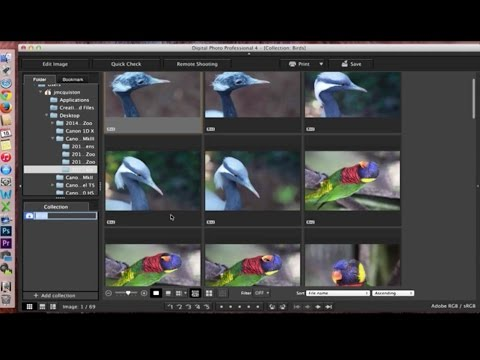 Canon Digital Photo Professional (DPP) 4: Managing Files