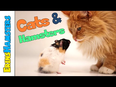 Keeping Cats/Dogs And Hamsters Safe In The Same Home