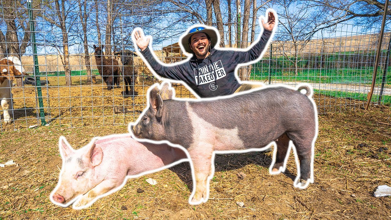 I Bought SHOW PIGS for My BACKYARD FARM!!!! (Help Me Name Them)