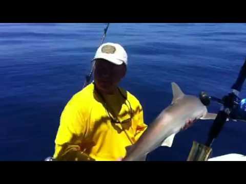 Mitchell handling a shark