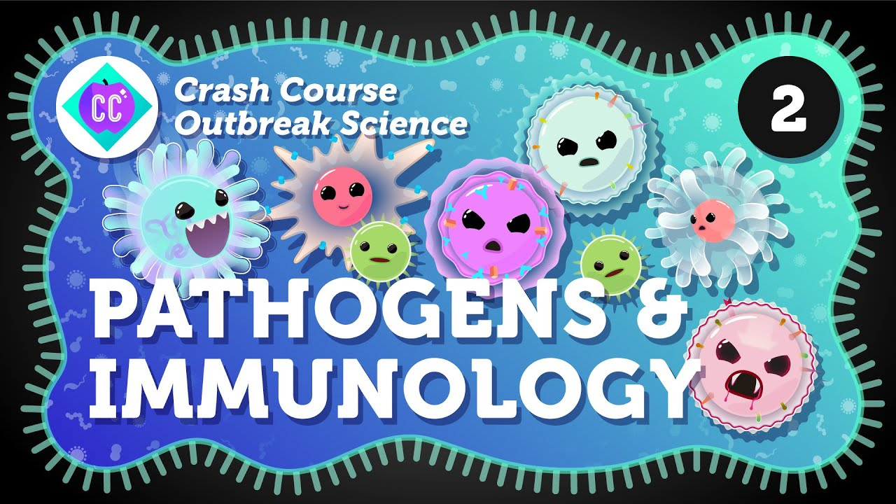 How Do Outbreaks Start? Pathogens and Immunology: Crash Course Outbreak Science #2