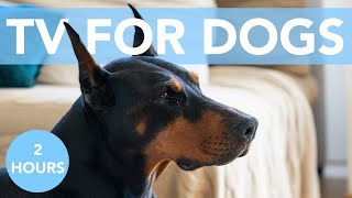 DOG TV! Virtual Adventures to Keep Bored Dogs Happy! NEW