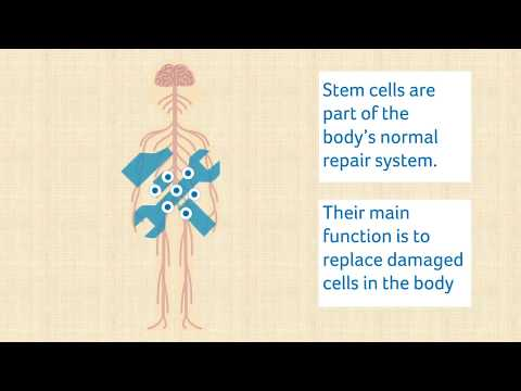 Stem cell treatment in MS - an introduction