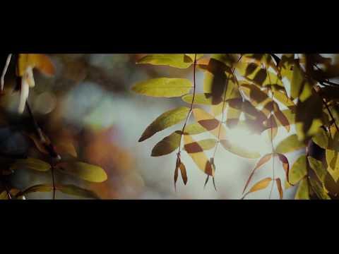 AUTUMN / Осень