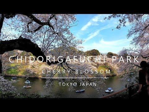 Japan, Tokyo - Chidorigafuchi park (2018)