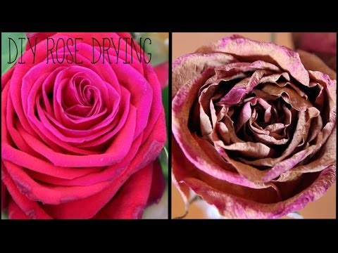 DIY Rose Drying || karagemma