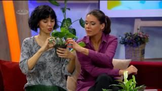10 მცენარე რომელიც ჰაერს ყველაზე კარგად ასუფთავებს