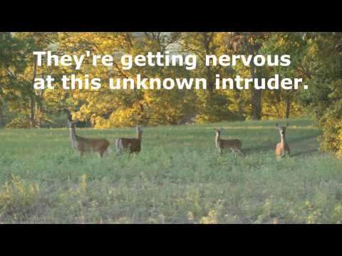 Captioned Video Whitetail Deer alerts and beginner information by WillCFish Tips and Tricks.
