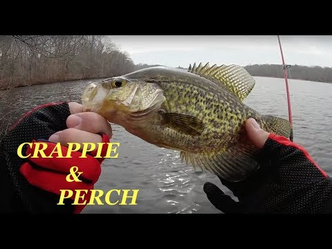 Perch & Crappie on the Crappie Magnet - Ultra Light Tackle - Long Island NY