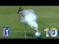 Top 10 Animal Encounters On The PGA TOUR
