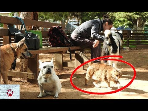 Stray cat crashes dog park and feels right at home