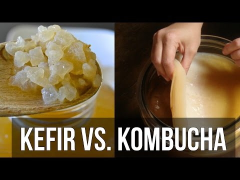 Kombucha | Recipe for Weight Loss or Total Myth? - Thomas DeLauer