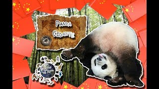 Panda Gigante | El animal convertido en marketing | (Animales del Mundo) |Especial países|