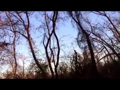 Sounds of nature Calling Bucks Pa.