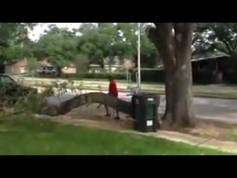 How not to cut a tree limb
