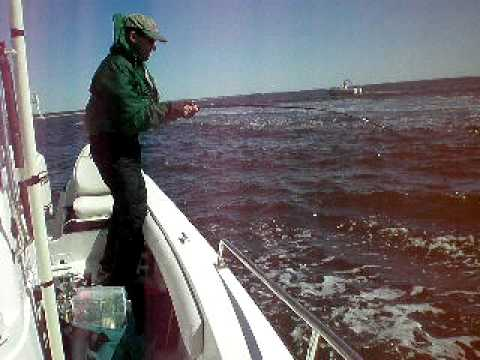 Dan Tenney catching Tuna on a fly rod out of Groton CT.