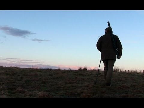 The Shooting Show --­ Scottish roebuck and the Beretta 486