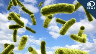 Are Clouds Full Of Bacteria?