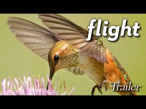 Flight: The Genius of Birds - Official Trailer