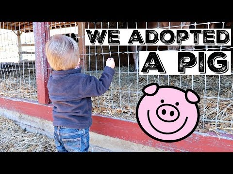 WE ADOPTED A PIG