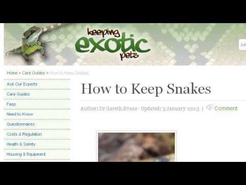 How-To Keep A Green Snake As A Pet