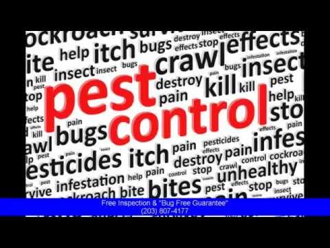 The Best Exterminator Stamford CT - Pest Service 100% Satisfaction Or Money Back!