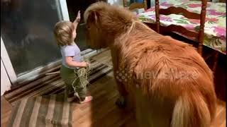 Little girl enjoys quality time with her miniature horse