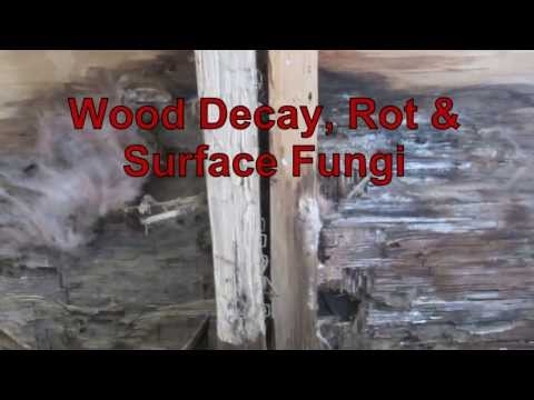 Wood Decay, Rot & Surface Fungi