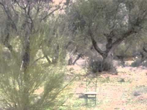 Finca Farm for sale Pozo Alcon in Granada Spain ref 14168