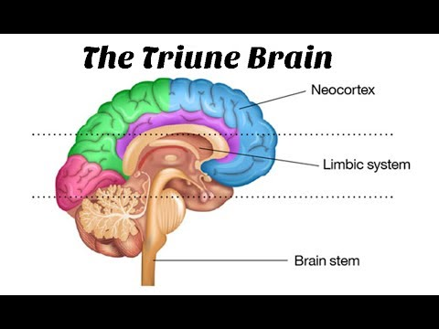 Master Your Life by Understanding Triune Brain Model