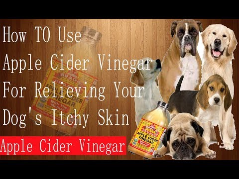 How To Use Apple Cider Vinegar For Relieving YOur Dog's Itchy  Skin