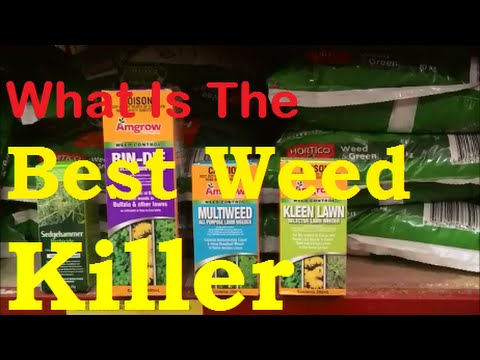 What Is The Best Weed Killer For Lawns [How To Get Rid Of Weeds In Lawn] [How To Kill Wintergrass]