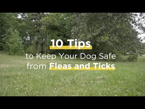 10 Tips to Prevent Ticks and Fleas