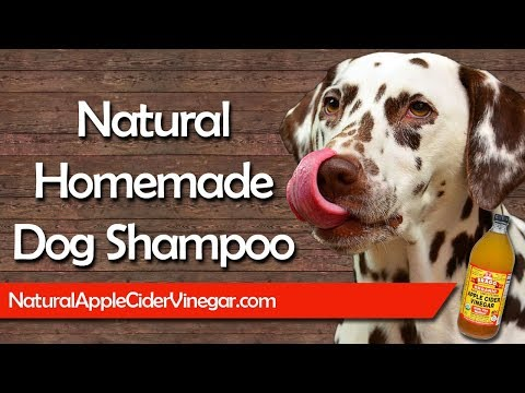 Homemade Natural Dog Shampoo Recipe for Itchy & Dry Skin