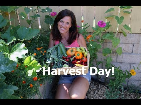 Harvest Day and How to Oven Roast Veggies - Quick and Simple!