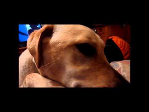 tail biting dog.wmv